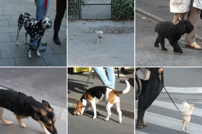 02-chiens_paris_6