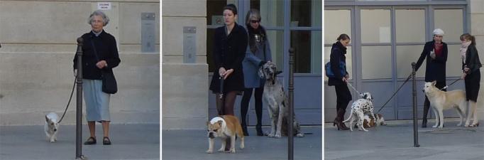 04-chiens_petits_peres_123