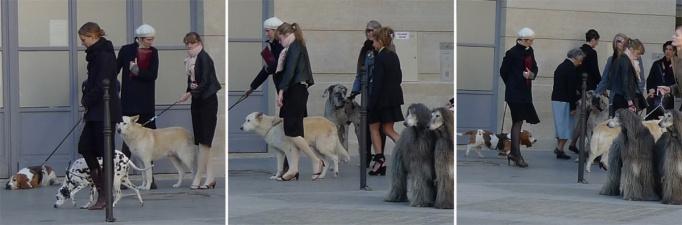 05-chiens_petits_peres_345