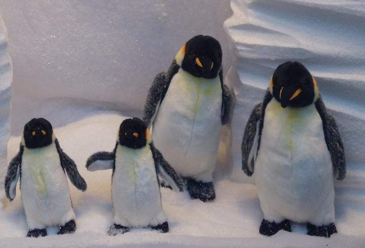 Baby-Tuileries-Vitrine-Noel-2012-Pingouins-8