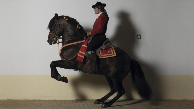 LOEWE-cheval