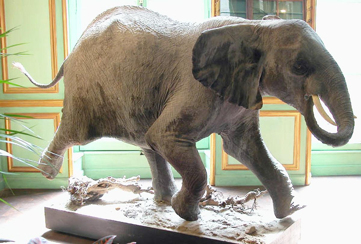 elephant-deyrolle-resine