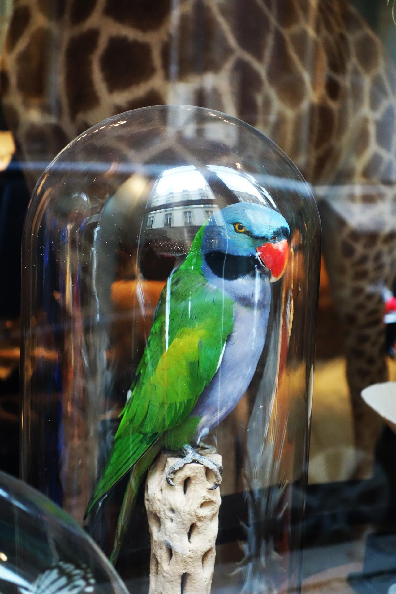 oiseaux - Design et Nature