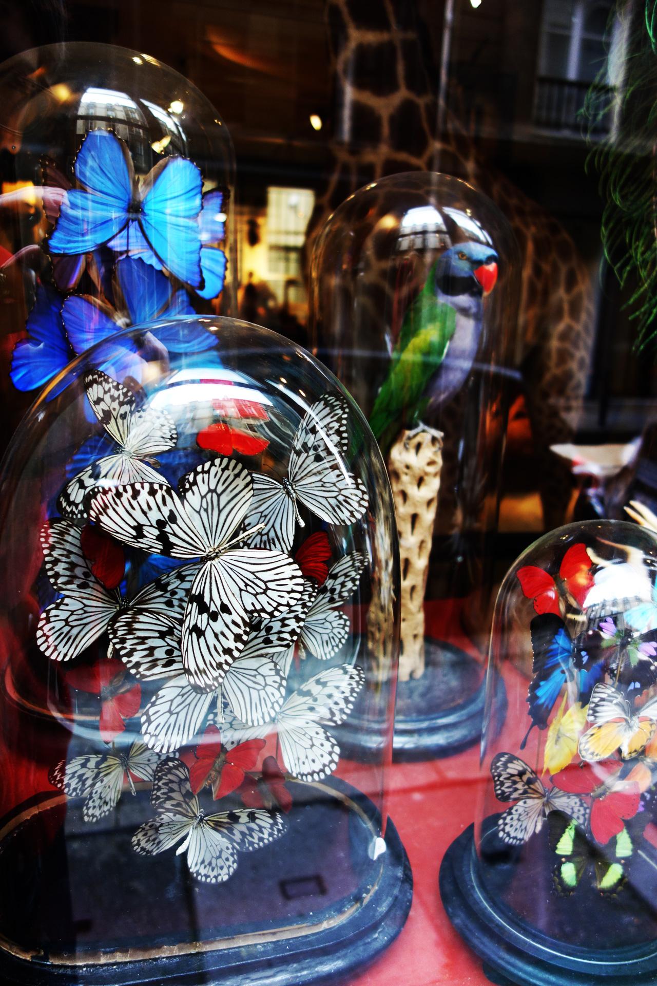 oiseaux papillons - Design et Nature