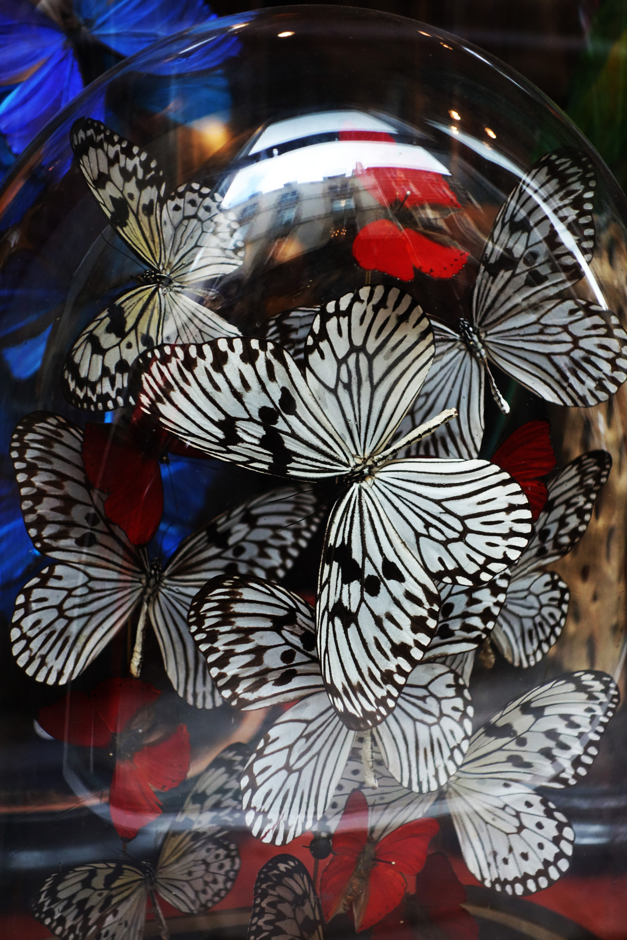 papillons - Design et Nature