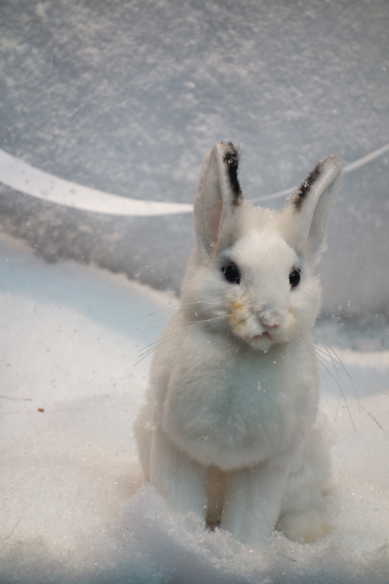 Baby-Tuileries-vitrines-noel-2013-blanche-lapin