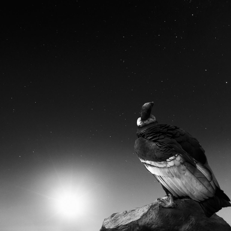 Noah-Vanderveer-Cosmos-06